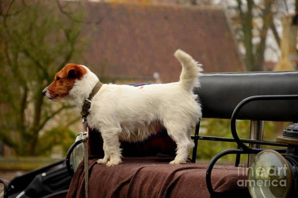 Photograph - Cute Dog On Carriage Seat Bruges Belgium by Imran Ahmed