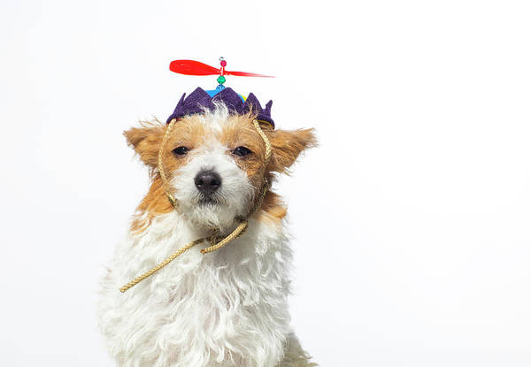 Cute Photograph - Cute Dog With Propeller Hat - The by Amandafoundation.org