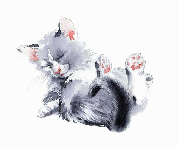 Wall Art - Painting - Cute Fluffy Kitten by Ikon Images