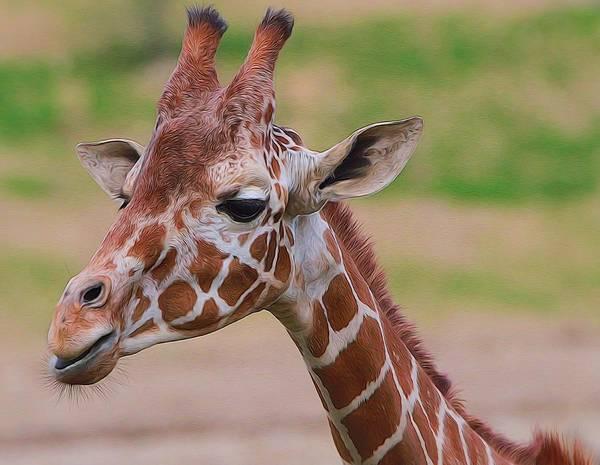 Eating Mixed Media - Cute Giraffe Portrait  by Dan Sproul