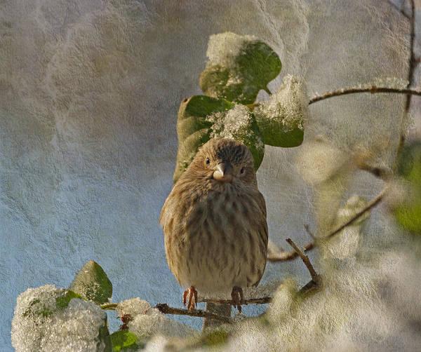 Photograph - Cute Little Finch by Sandy Keeton
