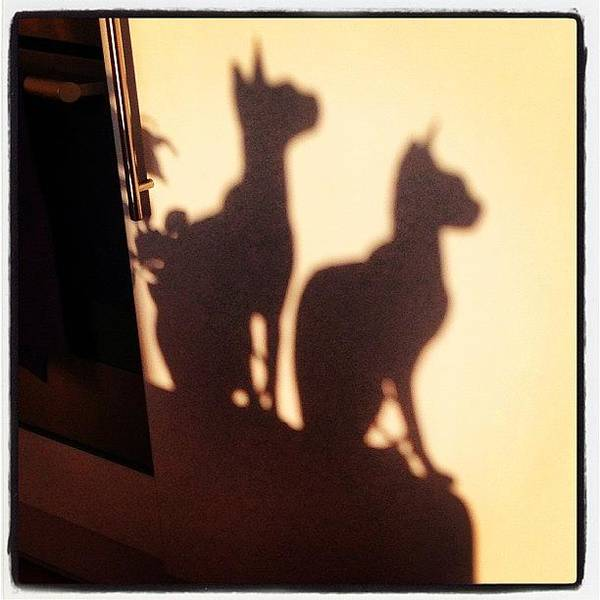 Charity Wall Art - Photograph - Cute #sphynx Shadows From Evening Sun by Samantha Charity Hall