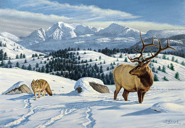 Wall Art - Painting - Cutoff Mountain -  Elk And Coyote   by Paul Krapf