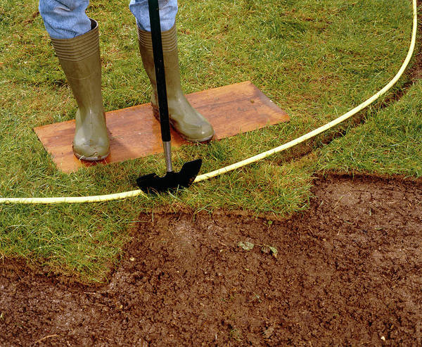 Shovel Photograph - Cutting A Flowerbed by Science Photo Library