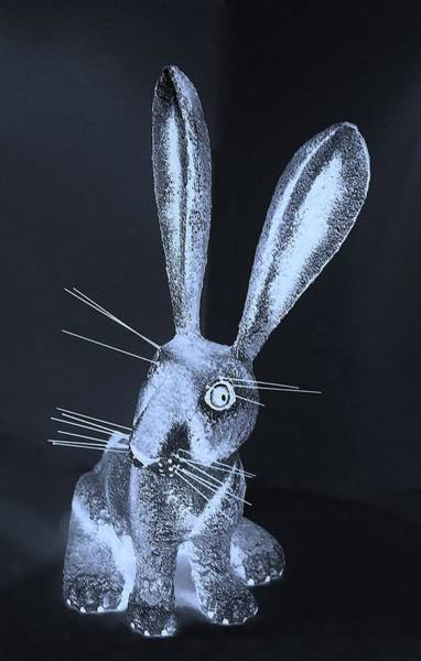 Photograph - Cyan New Mexico Rabbit by Rob Hans