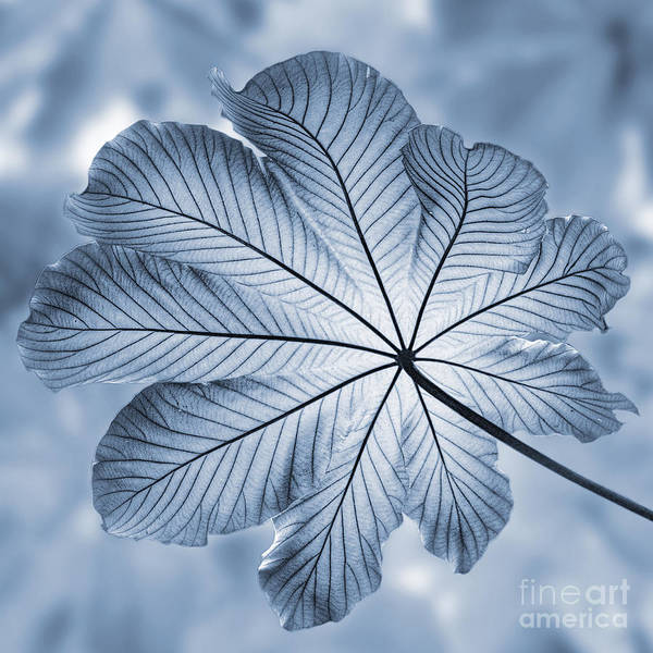Wall Art - Photograph - Cyanotype Rain Forest Leaf by John Edwards