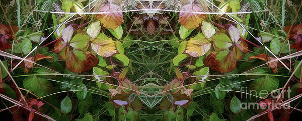 Photograph - Cycle 4 - Autumn by David Hargreaves