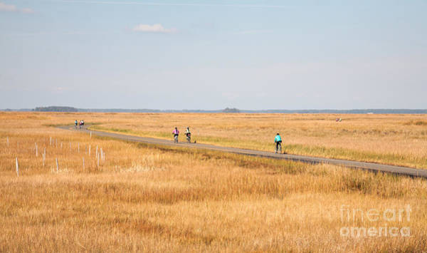 Photograph - Cycling Through Blackwater National Wildlife Refuge Near Cambridge Maryland by William Kuta