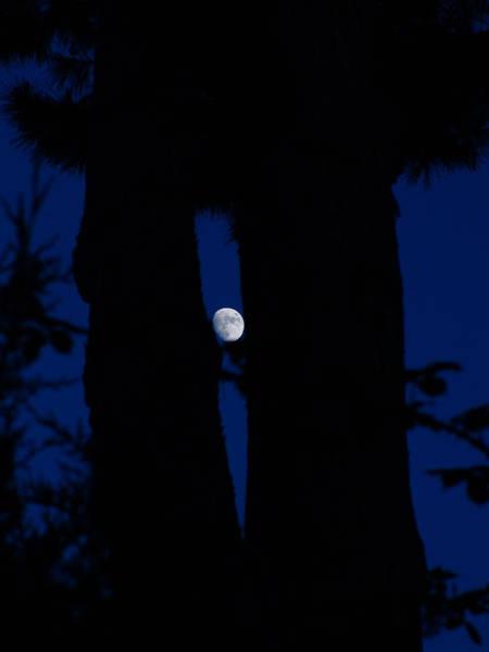 Photograph - Cyclops In The Night by Alessandro Della Pietra