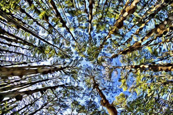 Digital Art - Cypress Dome by Patrick M Lynch