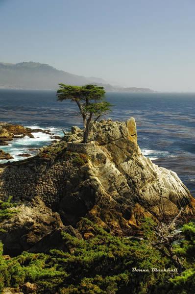 Monterey Cypress Photograph - Cypress by Donna Blackhall