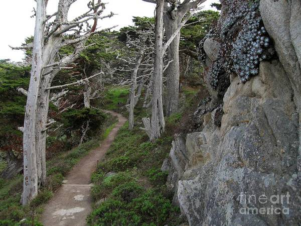 Photograph - Cypress Grove Trail by James B Toy
