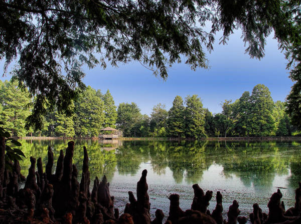 Honor Heights Park Photograph - Cypress Knees And The Lake by Carolyn Fletcher