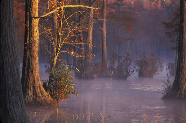 Photograph - Cypress Morning by Jim Dollar