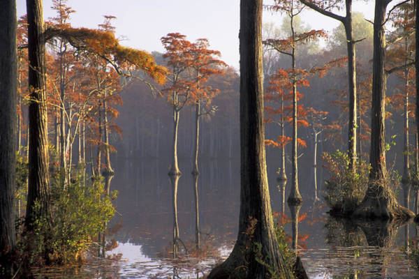 Photograph - Cypress Pond by Jim Dollar