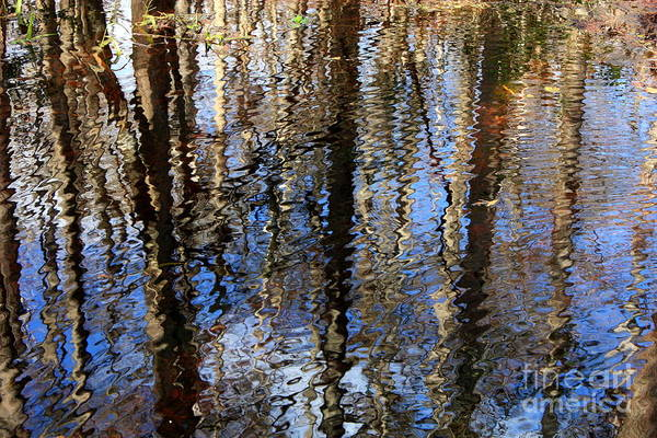 Photograph - Cypress Reflection Nature Abstract by Carol Groenen