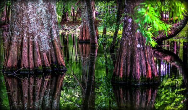 Cypress Gardens Photograph - Cypress Secrets by Karen Wiles