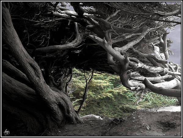 Photograph - Cypress Skeleton by Wayne King