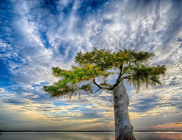 Bald Cypress Digital Art - Cypress Sunrise by Gregory W Leary