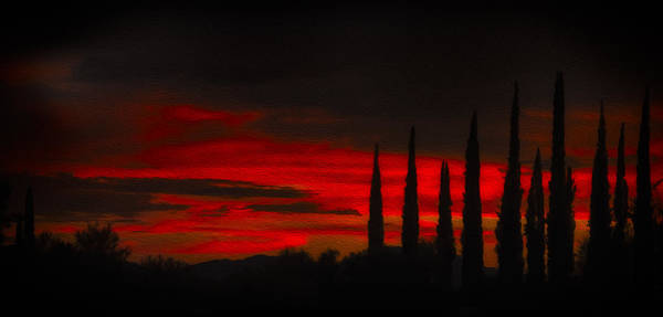 Photograph - Cypress Sunset N0.1 by Mark Myhaver