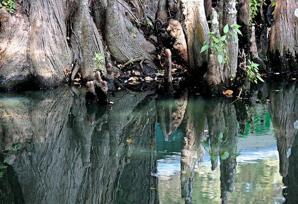 Cypress Knees Photograph - Cypress Swamp In Reflection by Suzanne Gaff