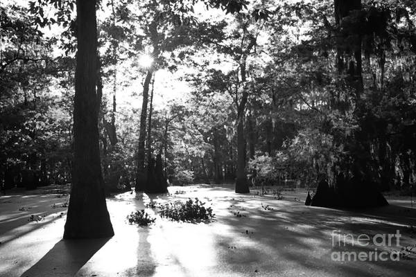 Photograph - Cypress Swamp Morning by Thomas R Fletcher