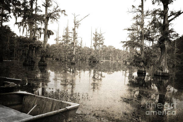 Swamp Photograph - Cypress Swamp by Scott Pellegrin