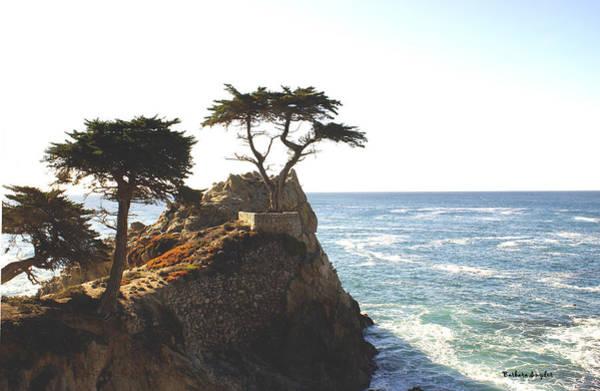 Cypress Digital Art - Cypress Tree by Barbara Snyder