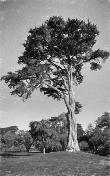 Photograph - Cypress Tree In Golden Gate Park Black And White by John M Bailey