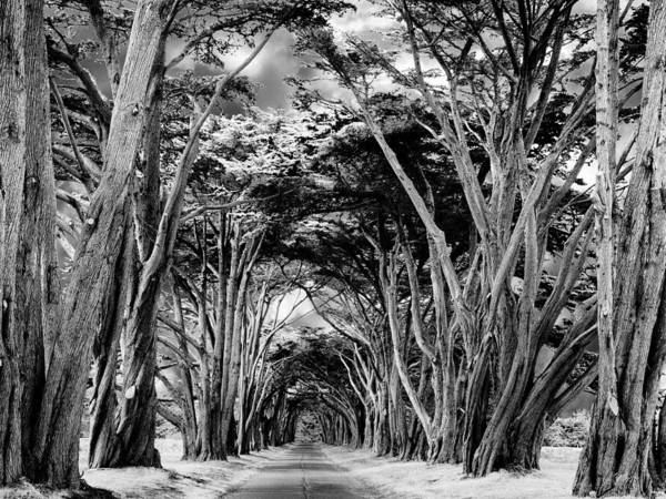 Monterey Cypress Photograph - Cypress Tree Tunnel Point Reyes by Dominic Piperata