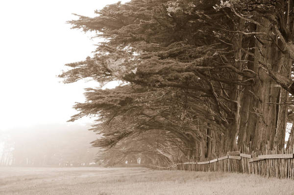 Fort Bragg Photograph - Cypress Trees Along A Farm, Fort Bragg by Panoramic Images