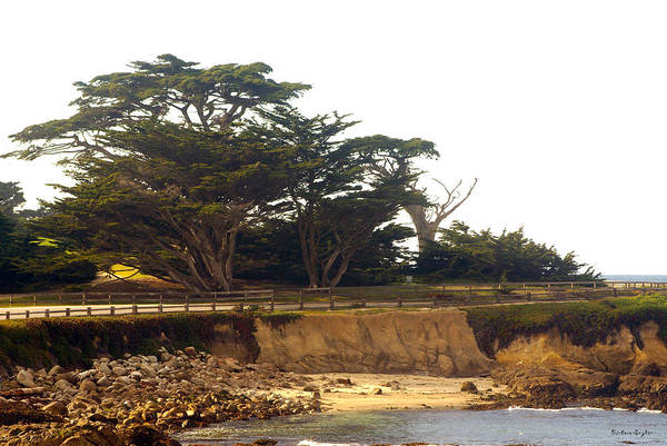 Cypress Digital Art - Cypress Trees On 17 Mile Drive by Barbara Snyder