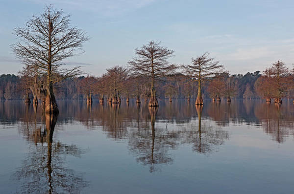 Wall Art - Photograph - Cypress Trees by Tom McCorkle
