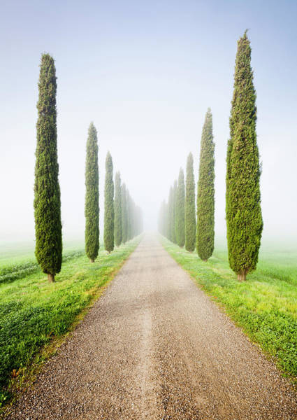 Journey Photograph - Cypresses In Morning Mist by Jorg Greuel
