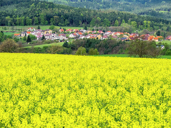 Canola Wall Art - Photograph - Czech Republic Canola Field With Small by Julie Eggers