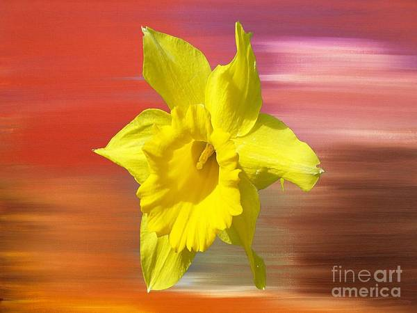 Floral Shower Curtain Painting - Daffodil 2 by Patrick J Murphy