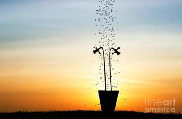 Dripping Water Photograph - Daffodil Dawn by Tim Gainey