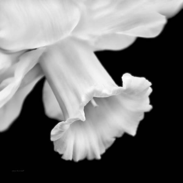 Black Narcissus Photograph - Daffodil Flower Macro Black And White by Jennie Marie Schell