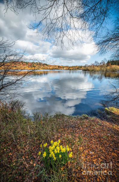 Coed Photograph - Daffodil Lake by Adrian Evans