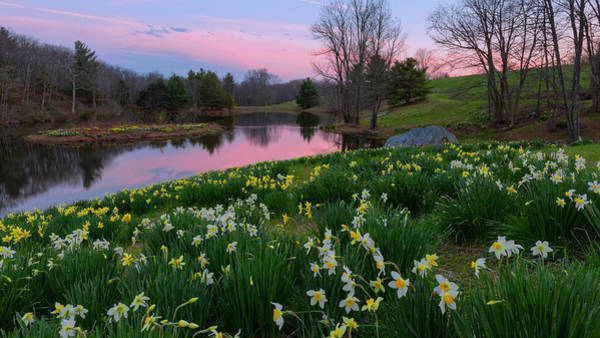 Soothing Photograph - Daffodil Sunset by Bill Wakeley