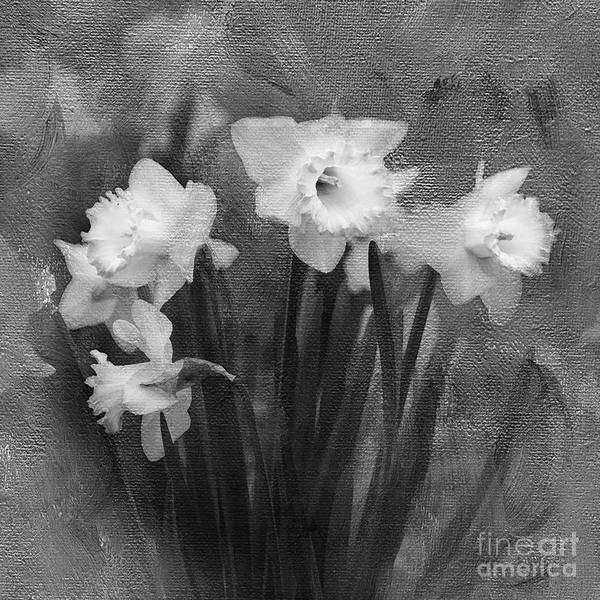 Black Narcissus Photograph - Daffodils In Black And White by Betty LaRue