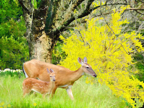 Digital Art - Doe And Fawn White-tails by Grace Dillon