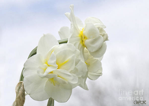 Photograph - Daffy's by Wanda Krack