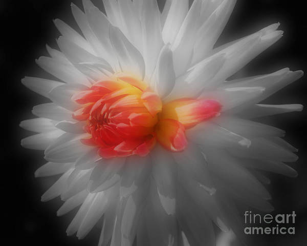 Photograph - Dahlia Flower Beauty by Smilin Eyes  Treasures