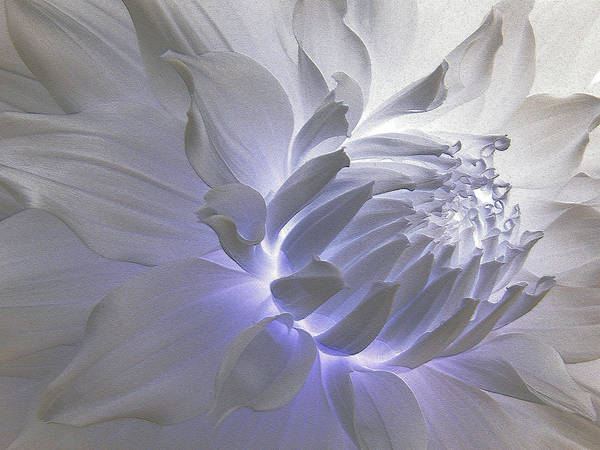 Photograph - Dahlia Inner Beauty by Lora Fisher