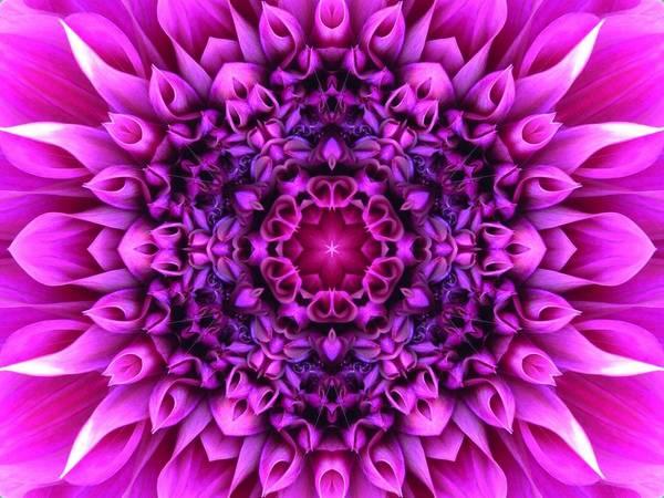 Digital Art - Dahlia Pink Star Mandala by Diane Lynn Hix