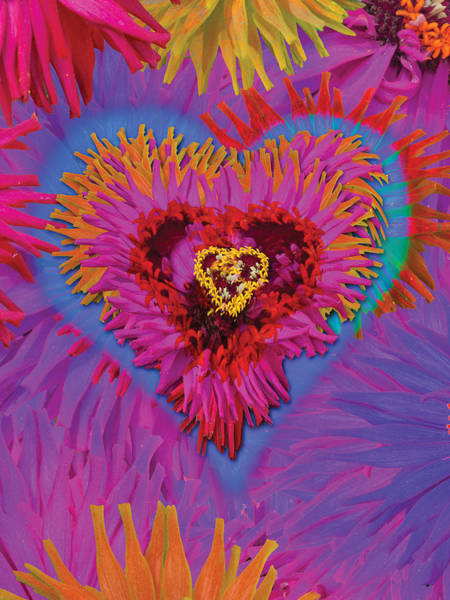Digital Illustration Photograph - Dahlia Rainbow by MGL Meiklejohn Graphics Licensing