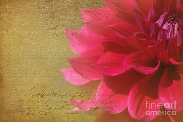 Photograph - Dahlias Finest Moment by Beve Brown-Clark Photography