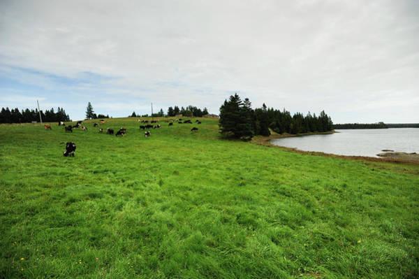 Milk Farm Photograph - Daily Life On An Organic Dairy Farm by Brian Fitzgerald