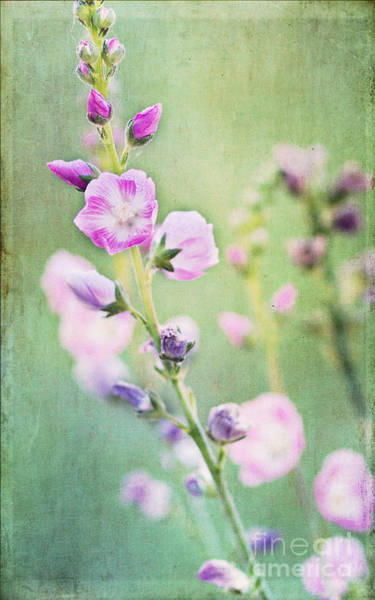 Photograph - Dainty Bloom by Pam  Holdsworth